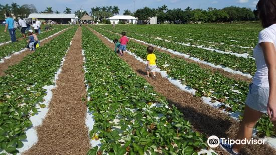 Knaus Berry Farm1