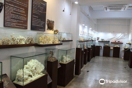 세계조가비박물관3