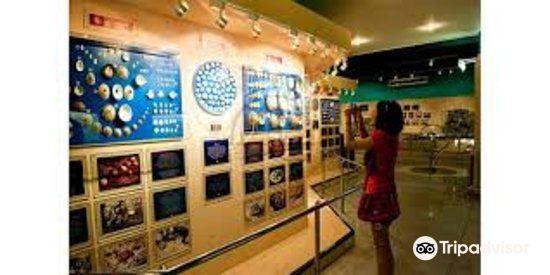 Phuket Seashell Museum2
