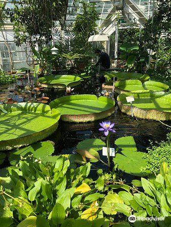 Kaisaniemi Botanic Garden1