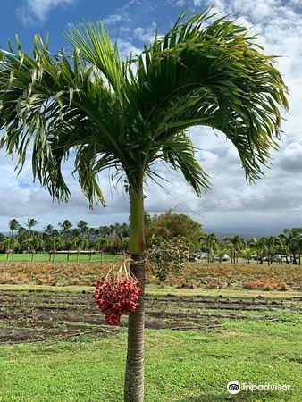 Maui Tropical Plantation3