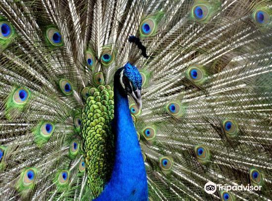 Penang Bird Park1