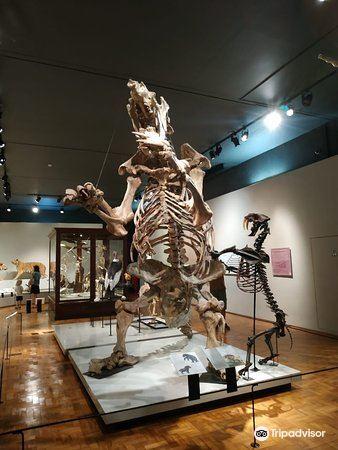 Sao Paulo Museum of Zoology1