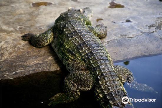 鱷魚農場3