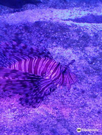 Shreveport Aquarium4