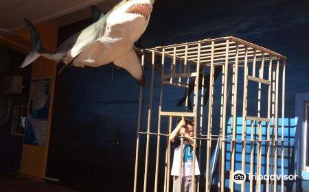KZN Sharks Board