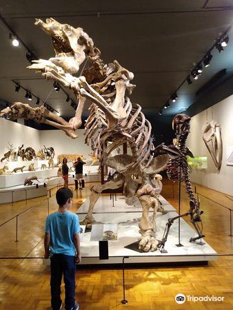 Sao Paulo Museum of Zoology2