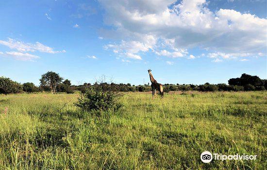 Groenkloof Nature Reserve3