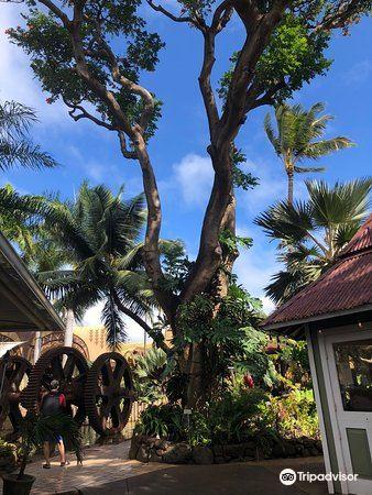 Maui Tropical Plantation4