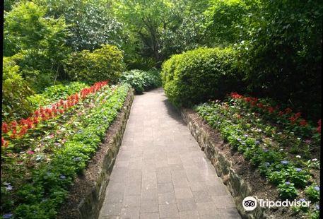 E G Waterhouse National Camellia Gardens