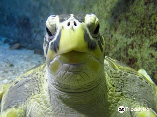 Manly Sea Life sanctuary2