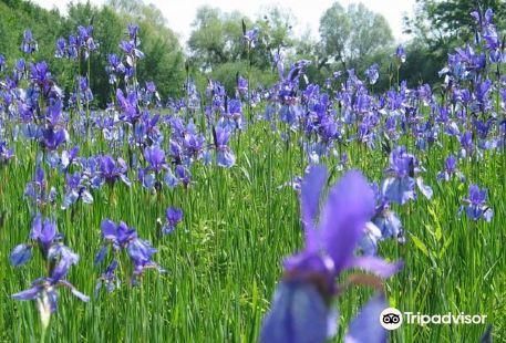 Eriskircher Ried Naturschutzgebiet