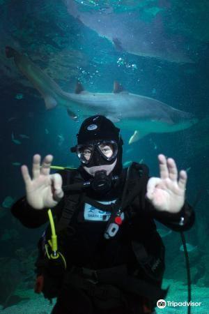 Manly Sea Life sanctuary3