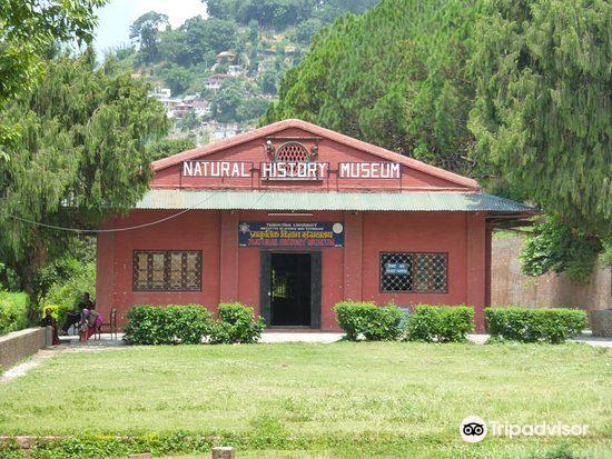 Natural History Museum4