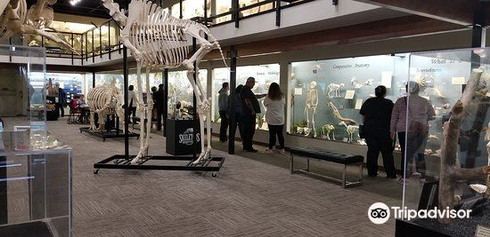 Museum of Osteology3