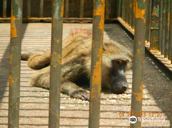 Kumasi Zoo2