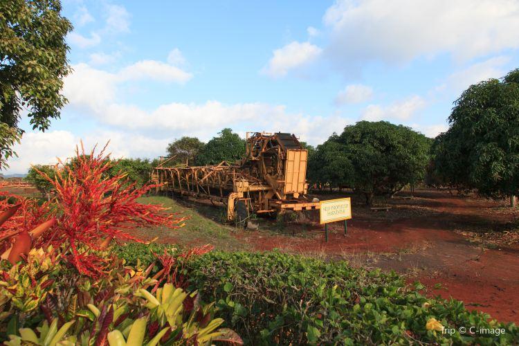 都樂鳳梨種植園1