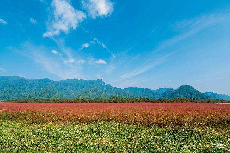 大九湖國家濕地公園3