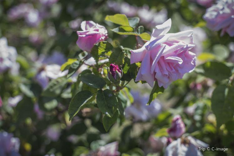市立玫瑰園3