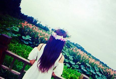 Hefengtangyuan Farm Tour