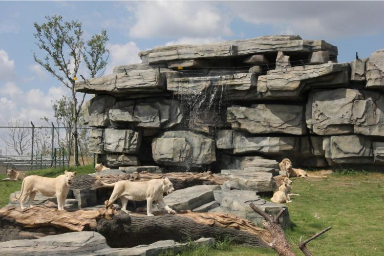 난통 삼림 야생동물원3