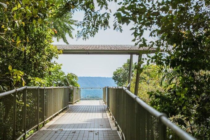瑪姆雨林天空步道1