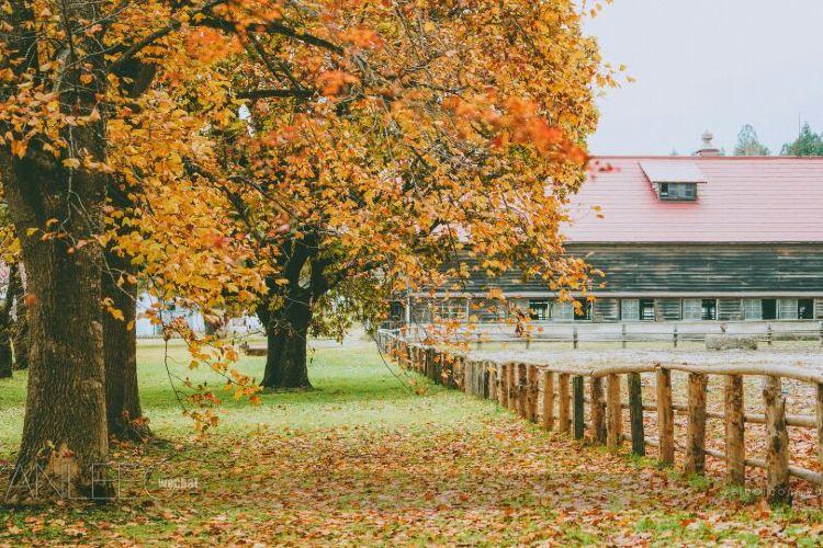 Koiwai Farm Makibaen4
