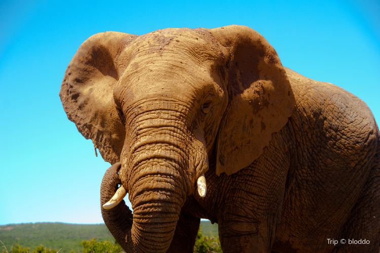 Addo Elephant-Back Safaris and Lodge