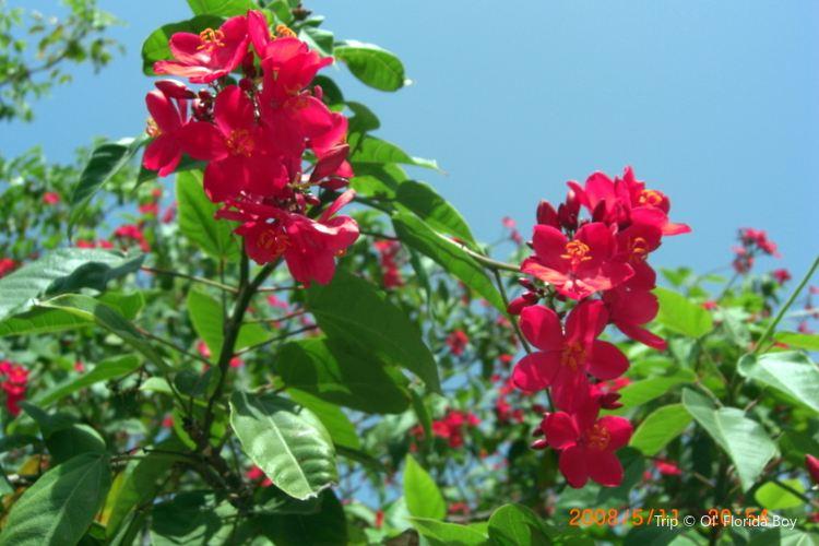 Hydroflora Gardens