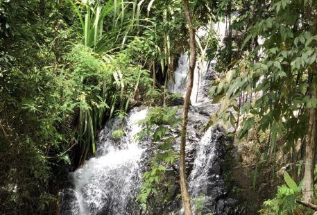 Mesilau/Nepenthes Garden