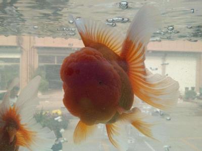 水世界花鳥魚蟲