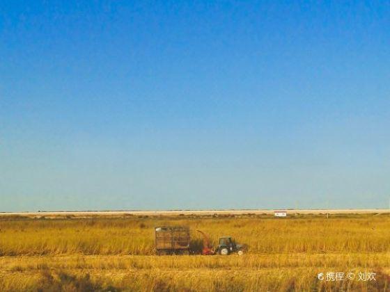 塔里木沙漠公路