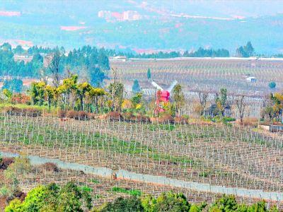 Yunnan Wine Village