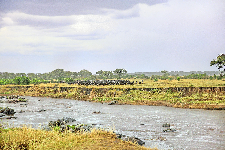 Seronera Serengeti