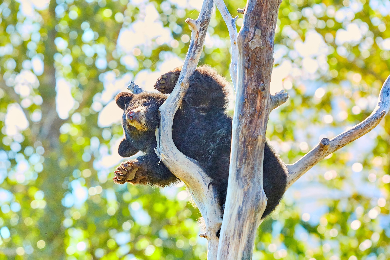 阿拉斯加野生動物保護中心