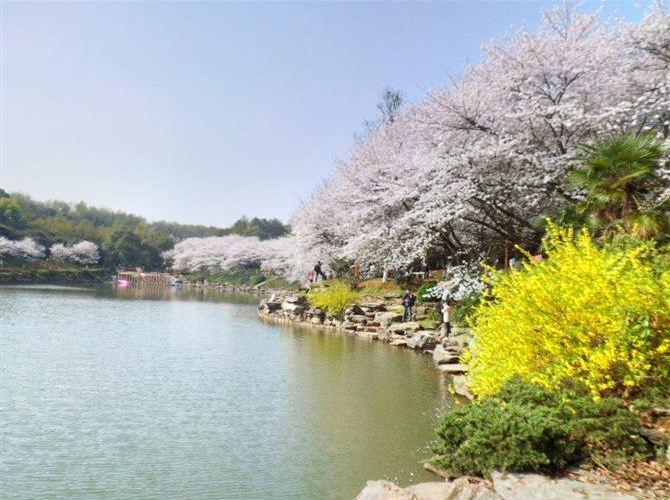 盛世聞櫻旅遊景區