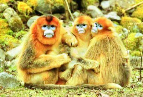 Golden Monkey Nature Reserve
