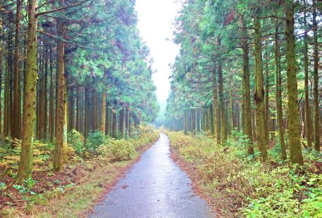 Saryeoni Forest Path