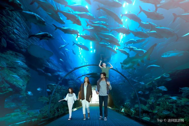 Dubai Aquarium and Underwater Zoo2