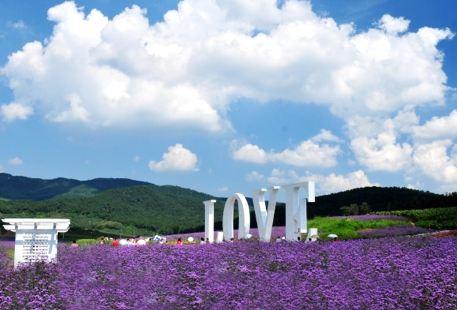 紫煙薰衣草莊園