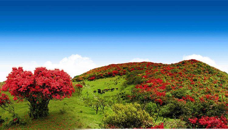 Baguanao Scenic Area