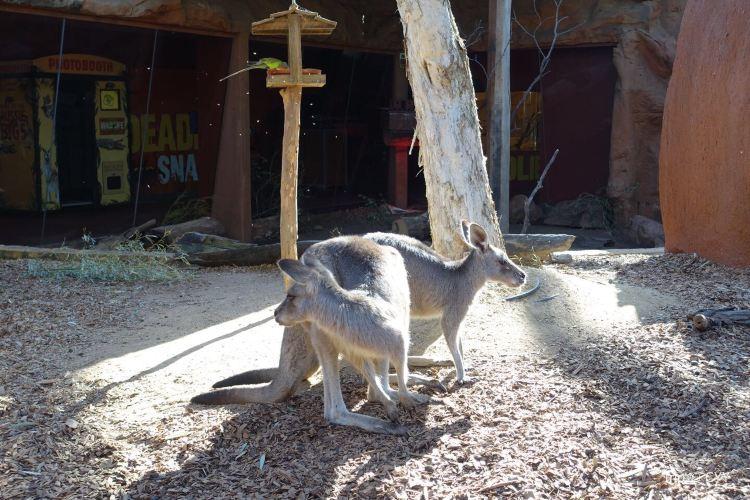 Wild Life Sydney Zoo4