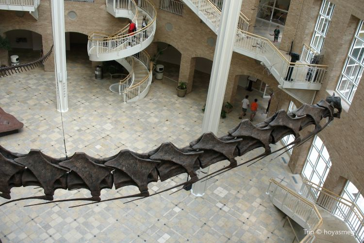 Fernbank Museum of Natural History3