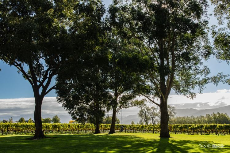 Cloudy Bay Vineyards1