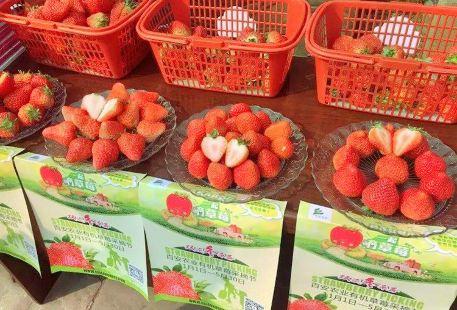 Bai'an Strawberry Plucking Park