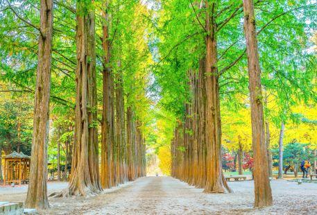 Dawn Redwood Road