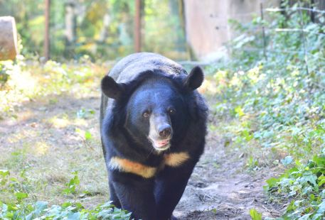 婆羅洲太陽熊保育中心