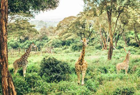나이로비 국립공원
