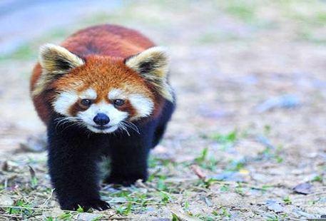 Ganzhou Forest Zoo