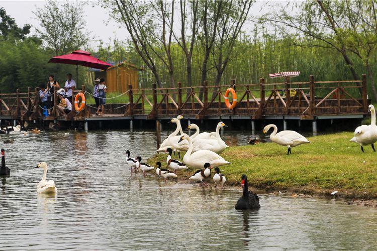 雙龍湖觀鳥園2